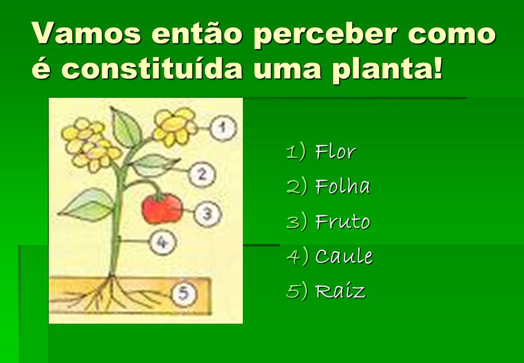 Vamos então perceber como é constituída uma planta!