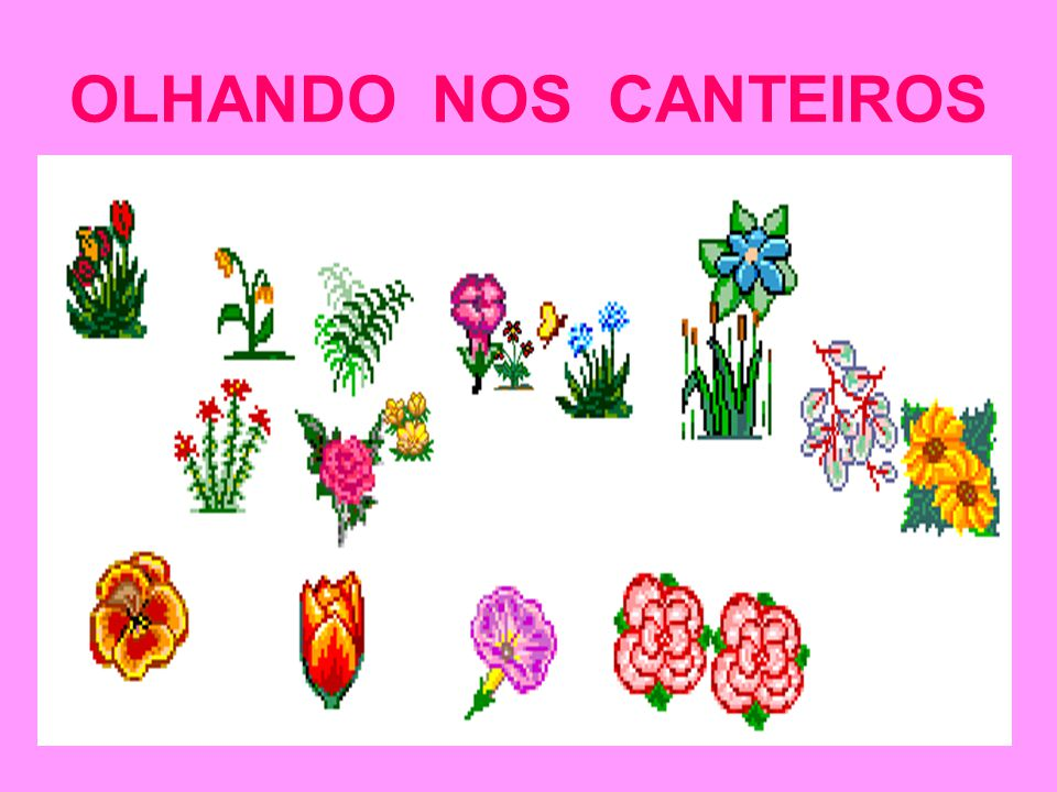 OLHANDO NOS CANTEIROS