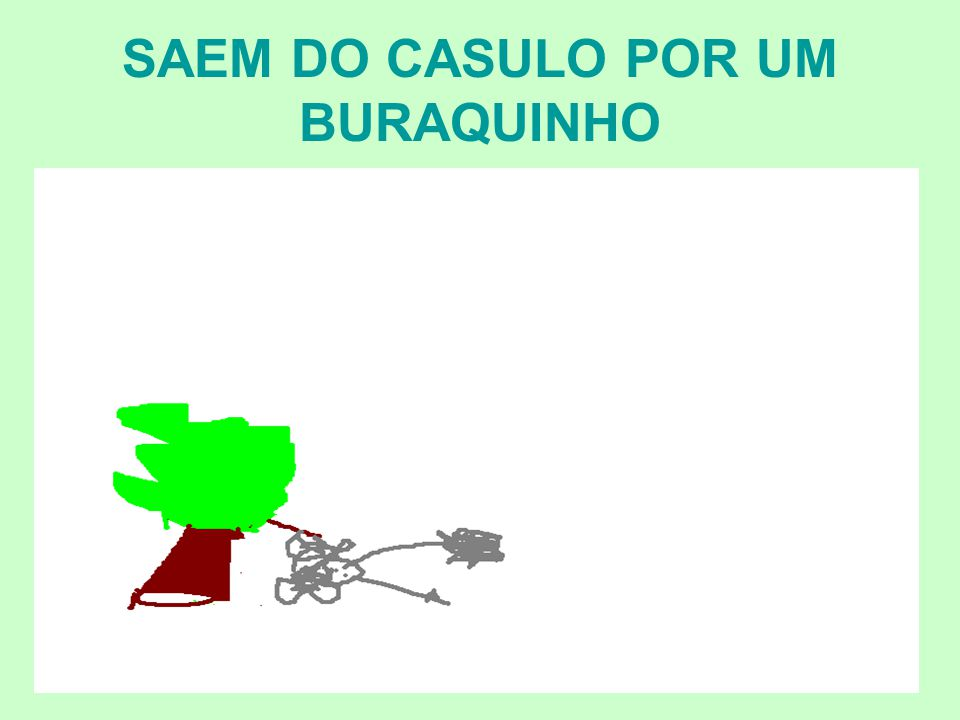 SAEM DO CASULO POR UM BURAQUINHO