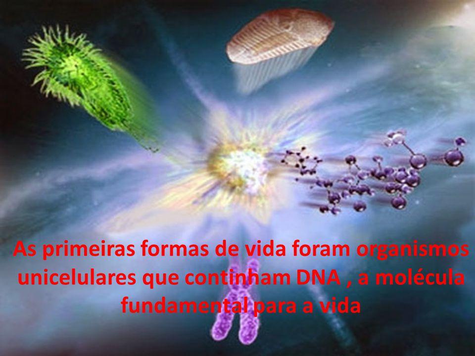 As primeiras formas de vida foram organismos unicelulares que continham DNA , a molécula fundamental para a vida