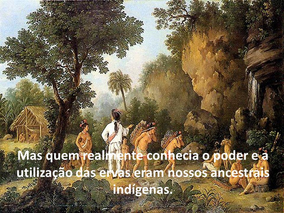 Mas quem realmente conhecia o poder e a utilização das ervas eram nossos ancestrais indígenas.