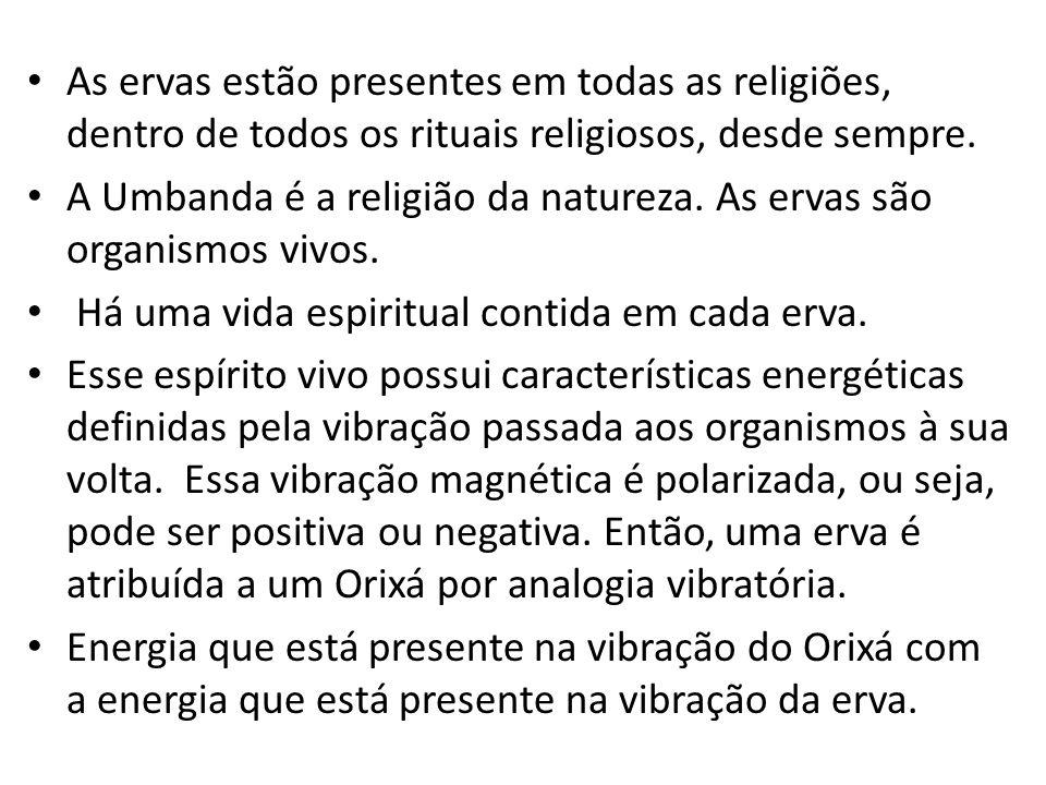 As ervas estão presentes em todas as religiões, dentro de todos os rituais religiosos, desde sempre.
