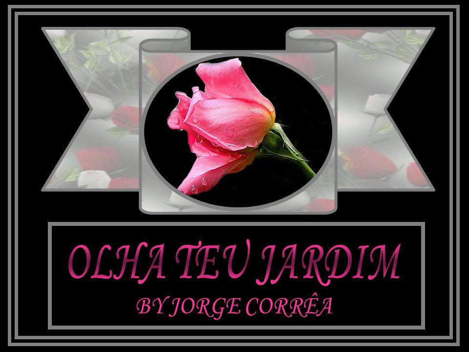 OLHA TEU JARDIM BY JORGE CORRÊA