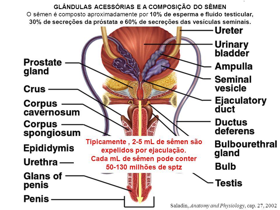 Tipicamente , 2-5 mL de sêmen são expelidos por ejaculação.