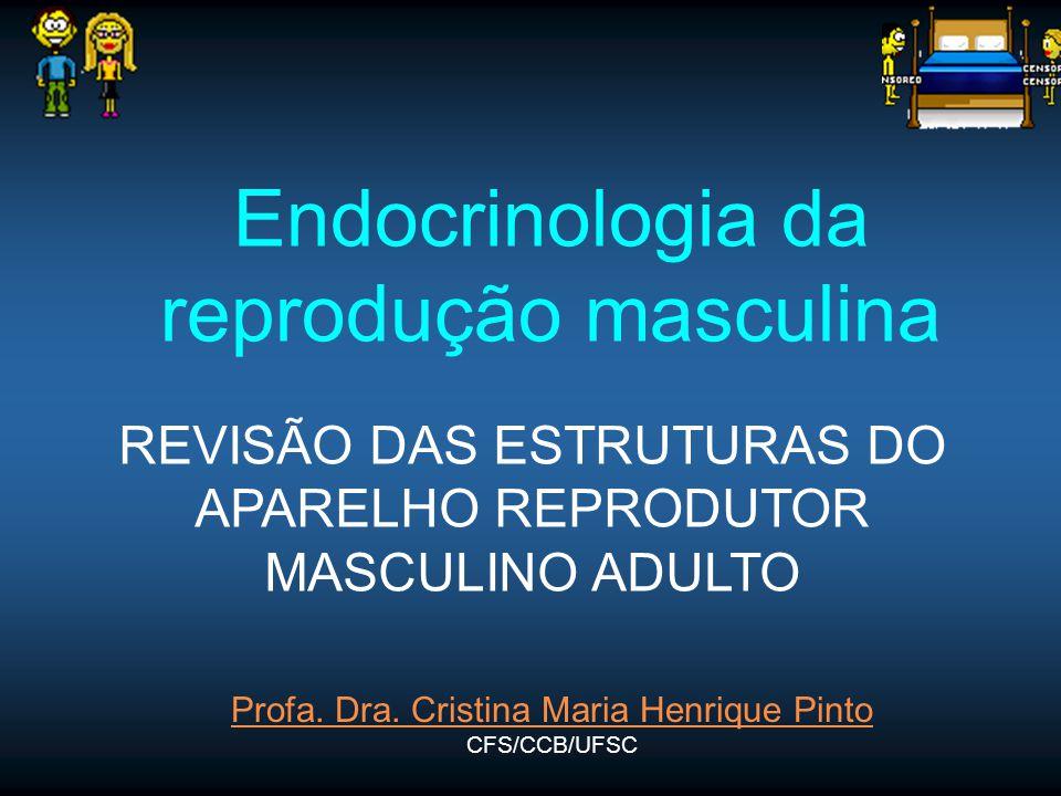 Endocrinologia da reprodução masculina