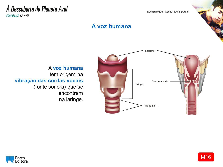A voz humana A voz humana tem origem na