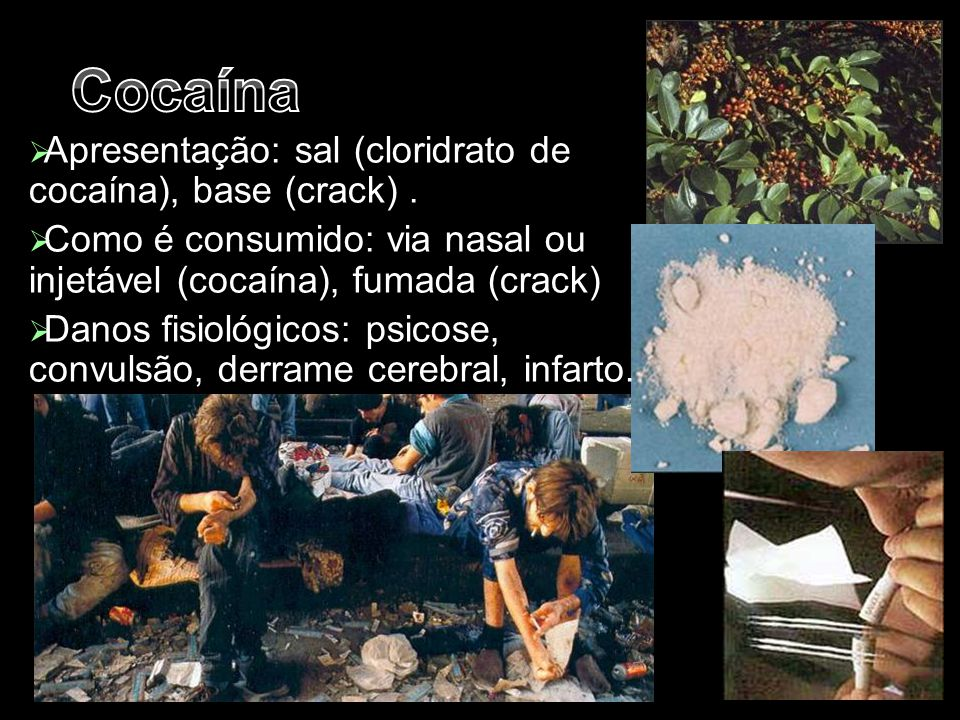 Cocaína Apresentação: sal (cloridrato de cocaína), base (crack) .