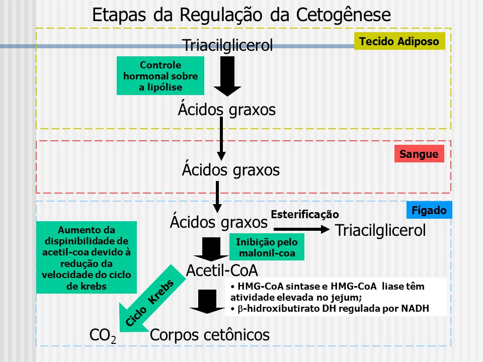 Controle hormonal sobre a lipólise Inibição pelo malonil-coa