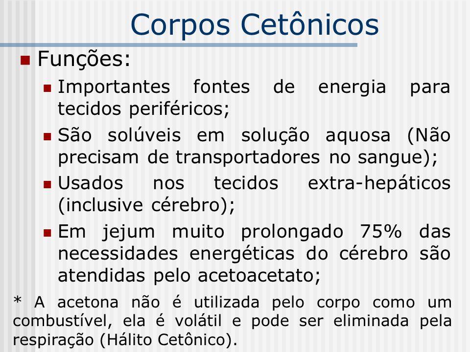 Corpos Cetônicos Funções: