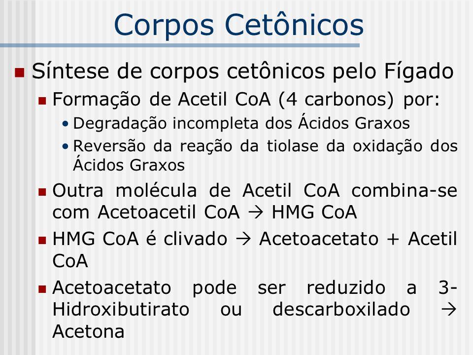 Corpos Cetônicos Síntese de corpos cetônicos pelo Fígado