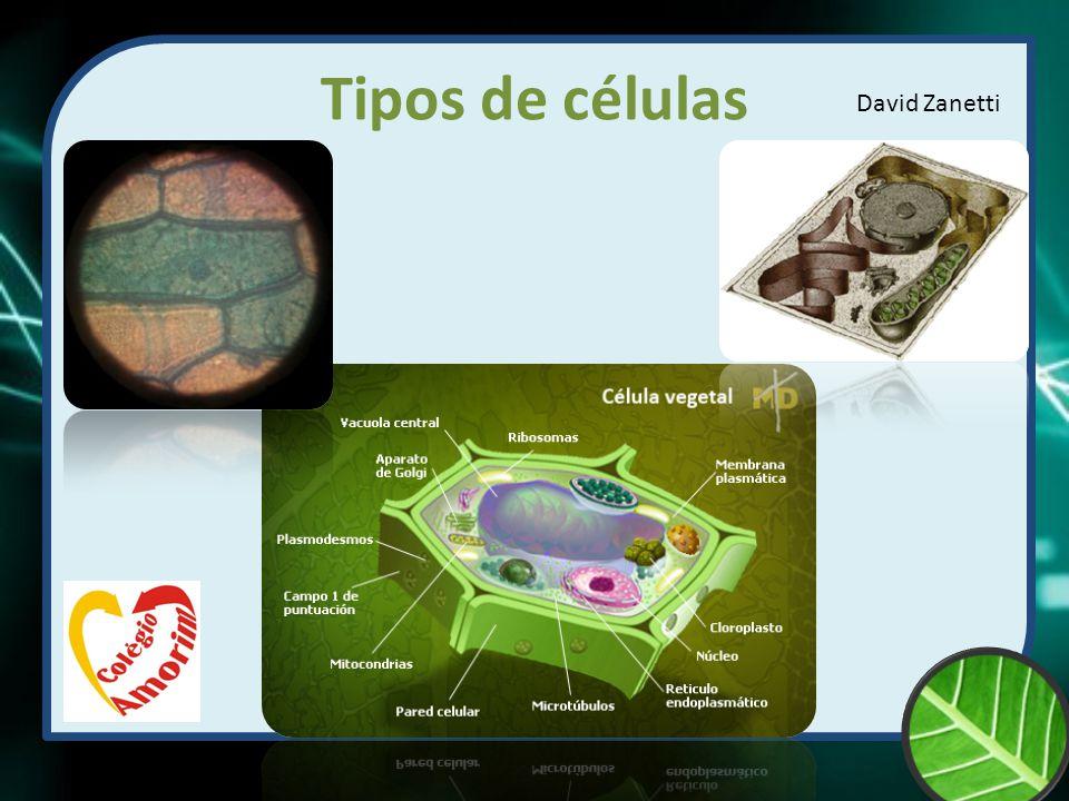 Tipos de células David Zanetti