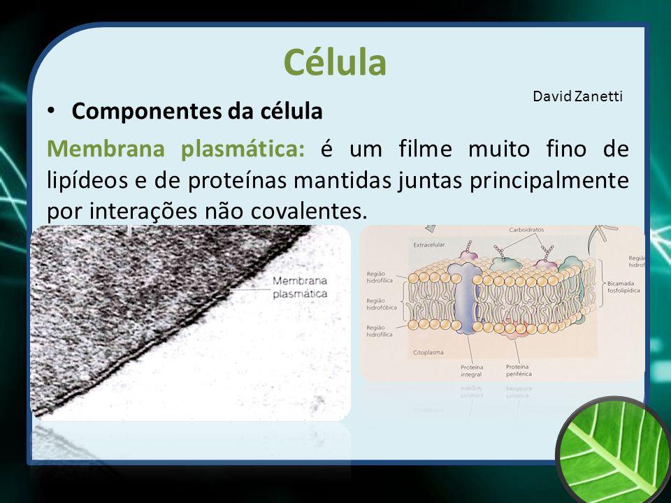 Célula Componentes da célula
