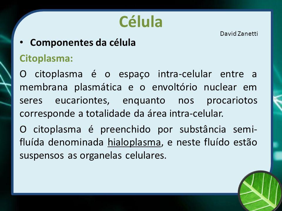Célula Componentes da célula Citoplasma: