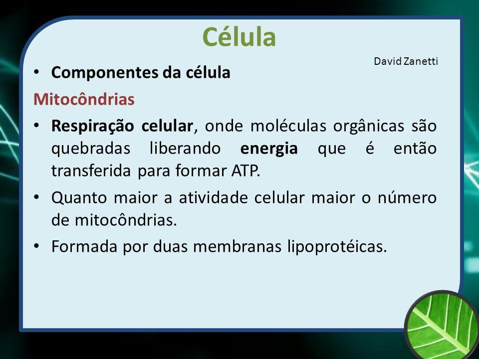 Célula Componentes da célula Mitocôndrias