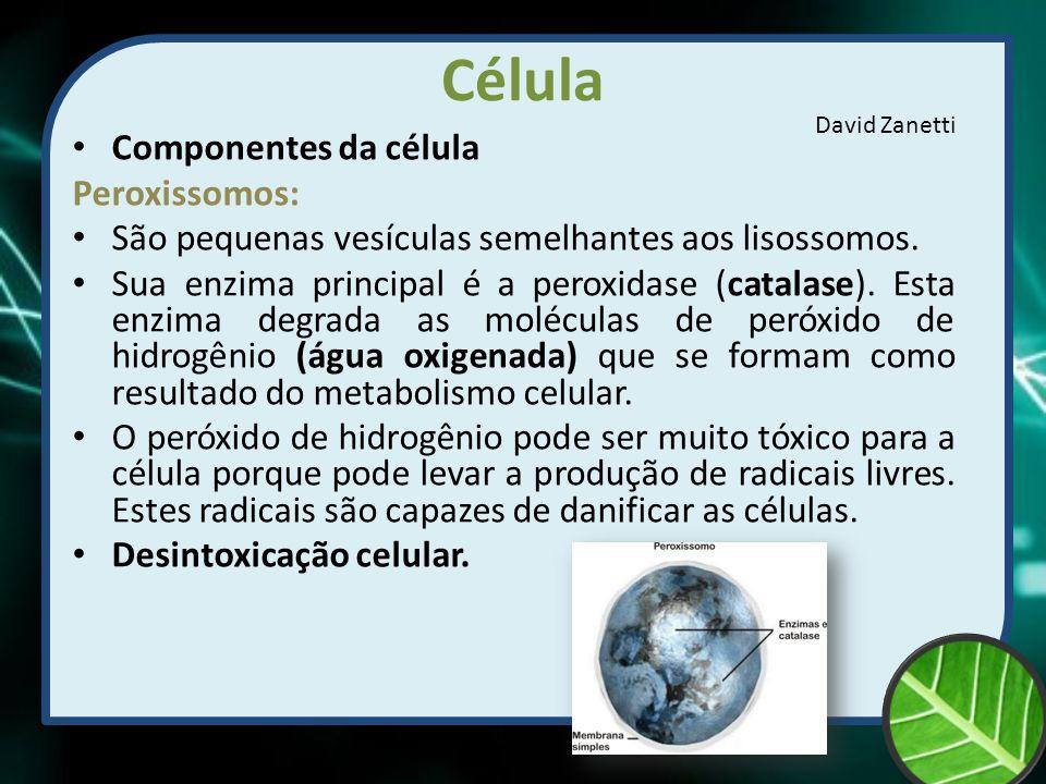 Célula Componentes da célula Peroxissomos: