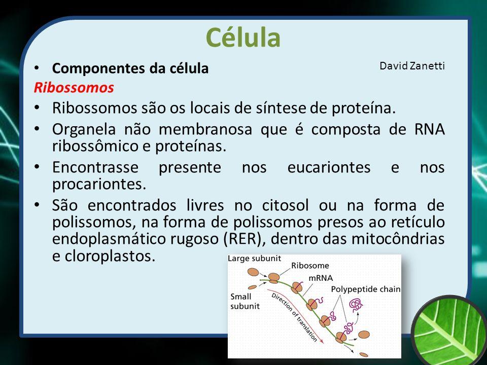 Célula Ribossomos são os locais de síntese de proteína.