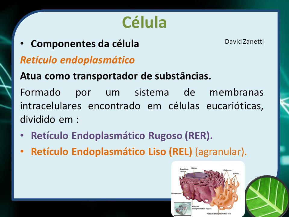 Célula Componentes da célula Retículo endoplasmático