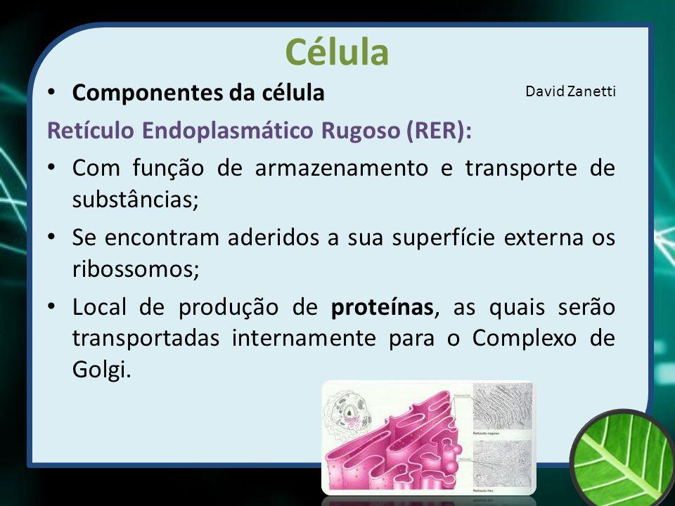 Célula Componentes da célula Retículo Endoplasmático Rugoso (RER):