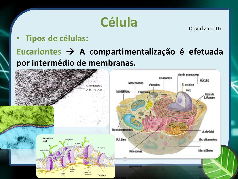 Célula Tipos de células:
