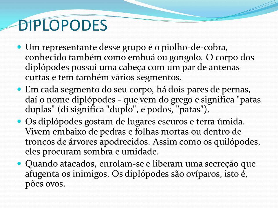 DIPLOPODES