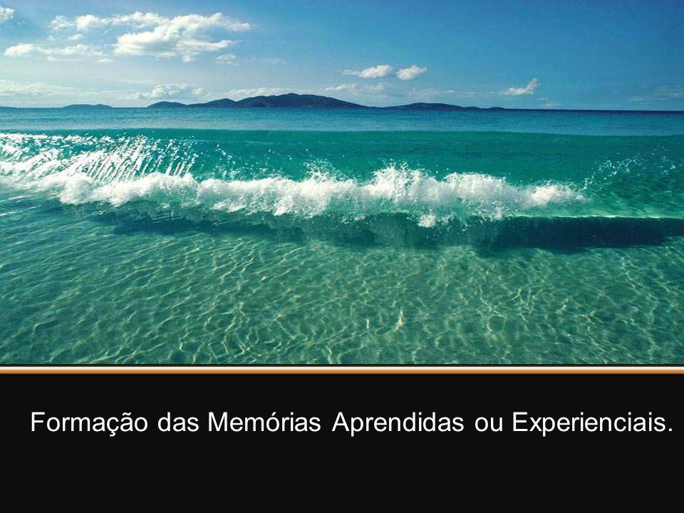 Formação das Memórias Aprendidas ou Experienciais.