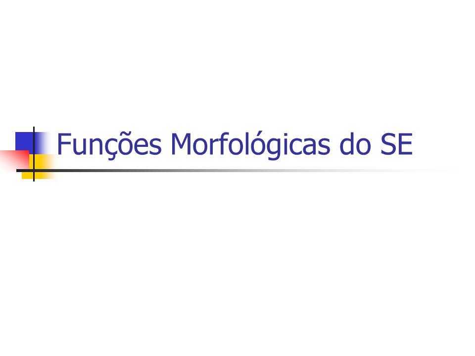Funções Morfológicas do SE