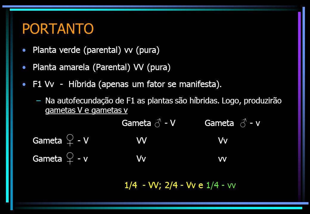 PORTANTO Planta verde (parental) vv (pura)