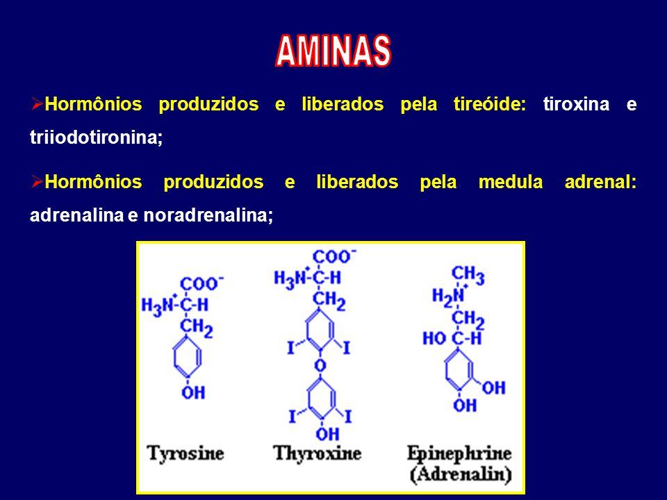 AMINAS Hormônios produzidos e liberados pela tireóide: tiroxina e triiodotironina;