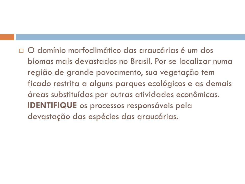 O domínio morfoclimático das araucárias é um dos biomas mais devastados no Brasil.
