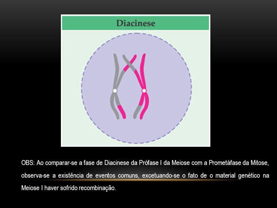 OBS: Ao comparar-se a fase de Diacinese da Prófase I da Meiose com a Prometáfase da Mitose, observa-se a existência de eventos comuns, excetuando-se o fato de o material genético na Meiose I haver sofrido recombinação.