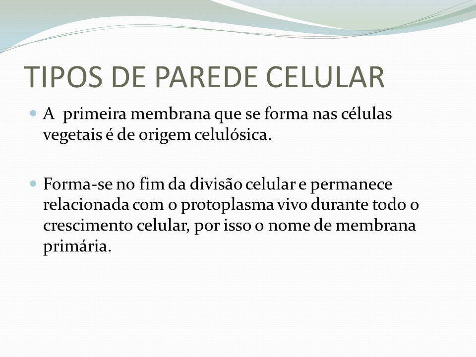 TIPOS DE PAREDE CELULAR