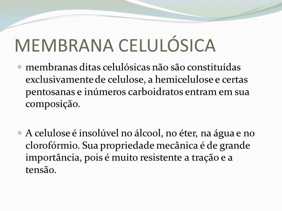 MEMBRANA CELULÓSICA
