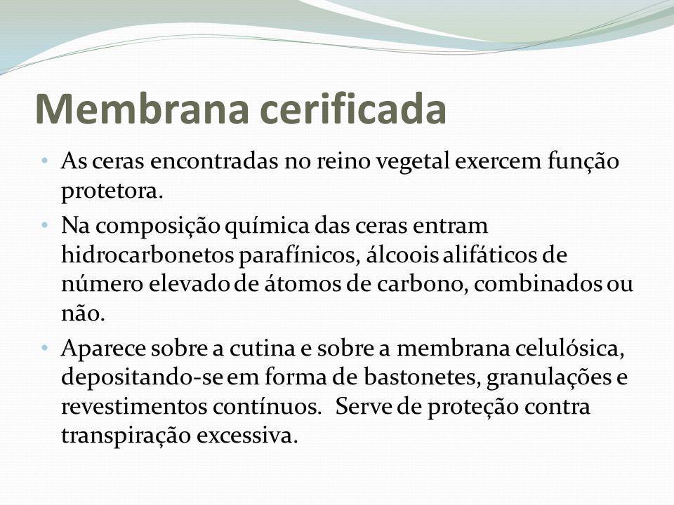 Membrana cerificada As ceras encontradas no reino vegetal exercem função protetora.