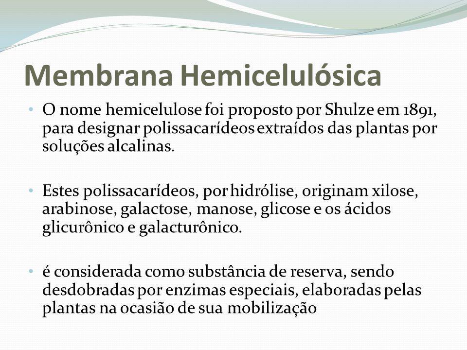 Membrana Hemicelulósica