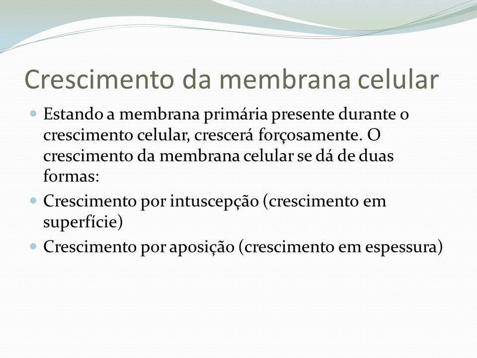 Crescimento da membrana celular