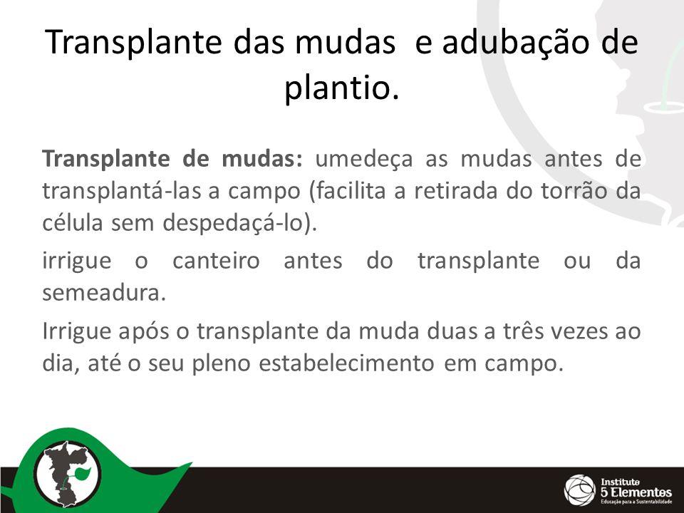 Transplante das mudas e adubação de plantio.