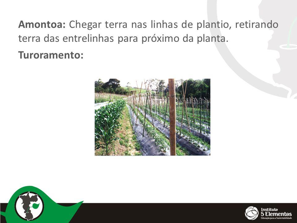 Amontoa: Chegar terra nas linhas de plantio, retirando terra das entrelinhas para próximo da planta.