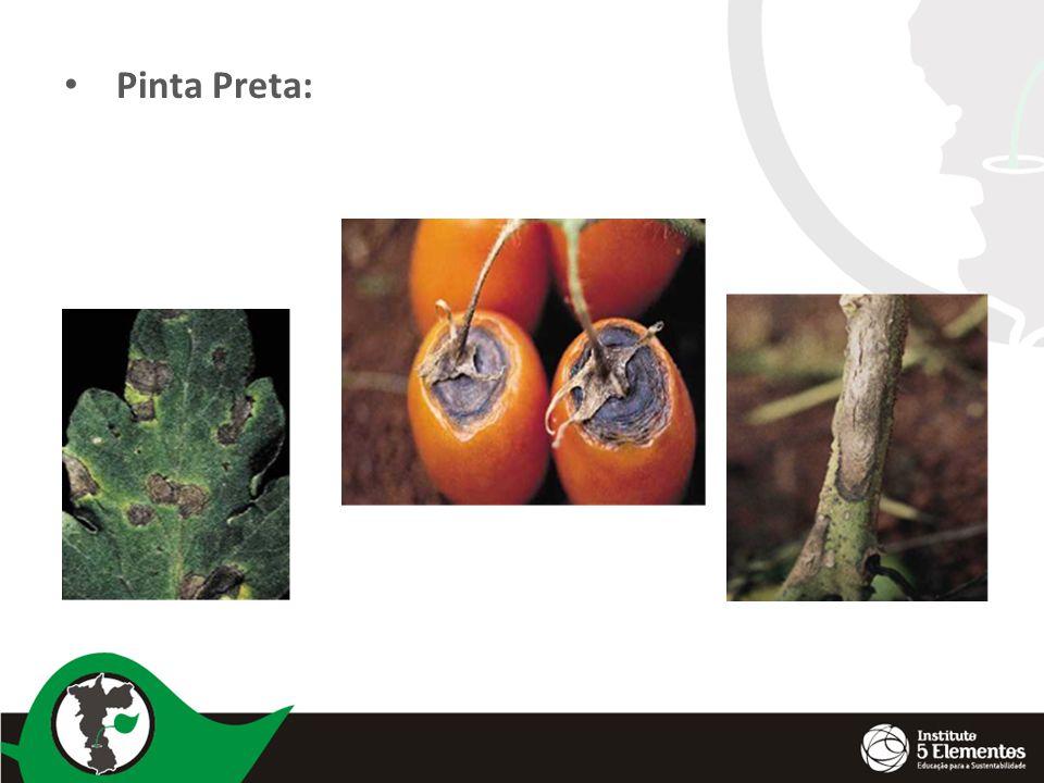 Pinta Preta: