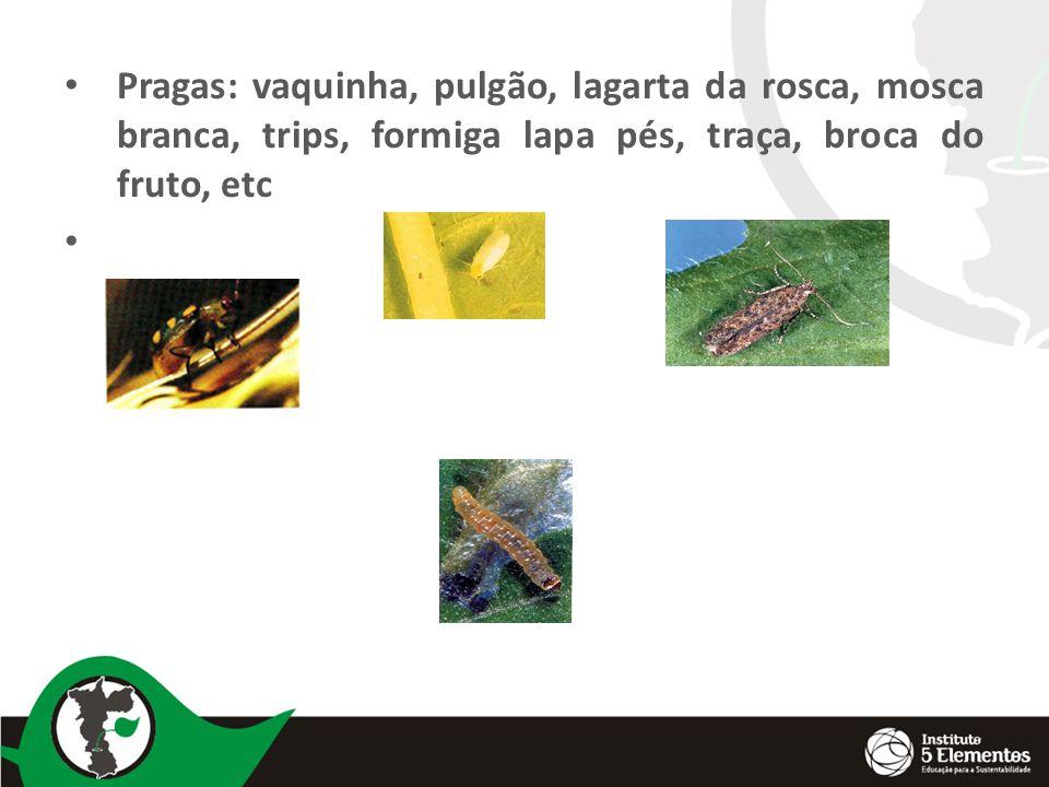 Pragas: vaquinha, pulgão, lagarta da rosca, mosca branca, trips, formiga lapa pés, traça, broca do fruto, etc
