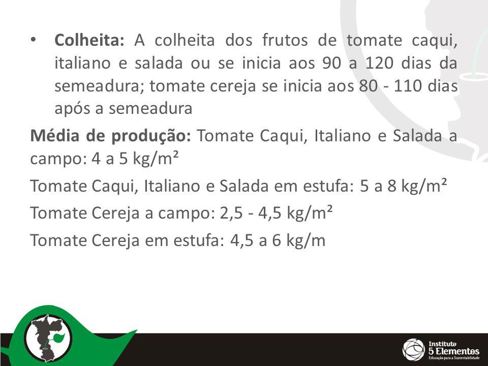 Colheita: A colheita dos frutos de tomate caqui, italiano e salada ou se inicia aos 90 a 120 dias da semeadura; tomate cereja se inicia aos 80 - 110 dias após a semeadura