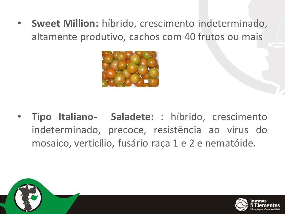 Sweet Million: híbrido, crescimento indeterminado, altamente produtivo, cachos com 40 frutos ou mais