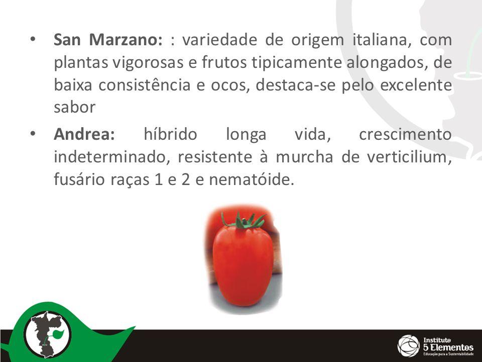 San Marzano: : variedade de origem italiana, com plantas vigorosas e frutos tipicamente alongados, de baixa consistência e ocos, destaca-se pelo excelente sabor