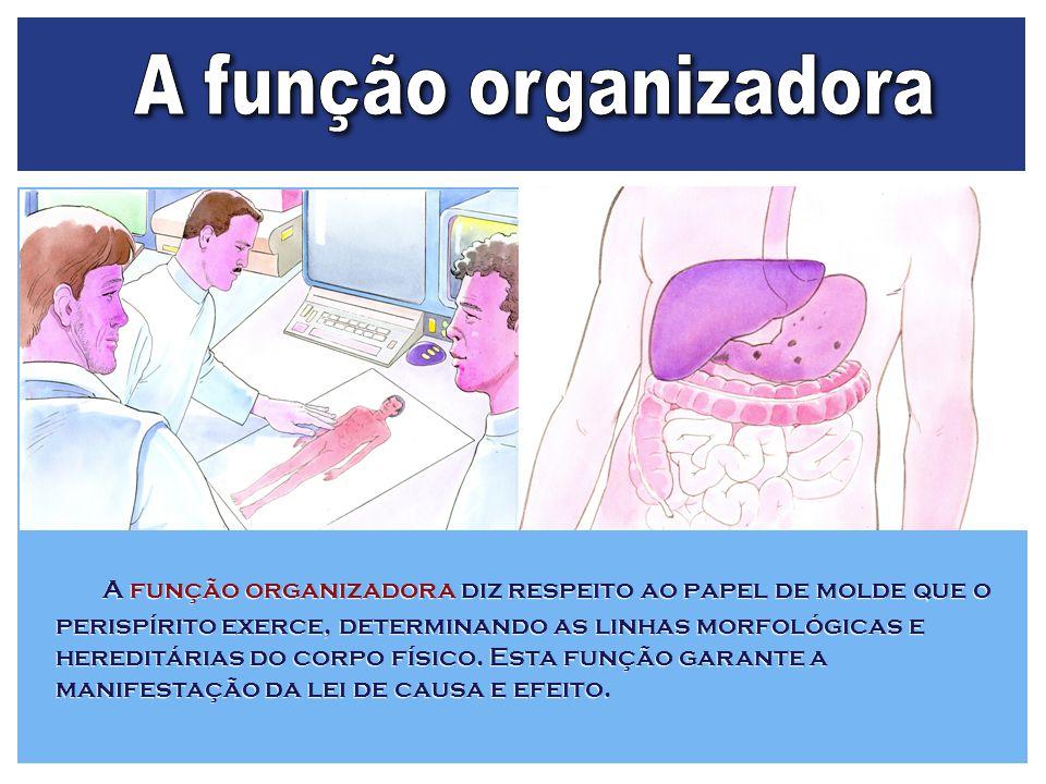 A função organizadora
