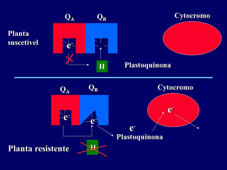 e- e- Planta resistente QA QB Cytocromo Plastoquinona