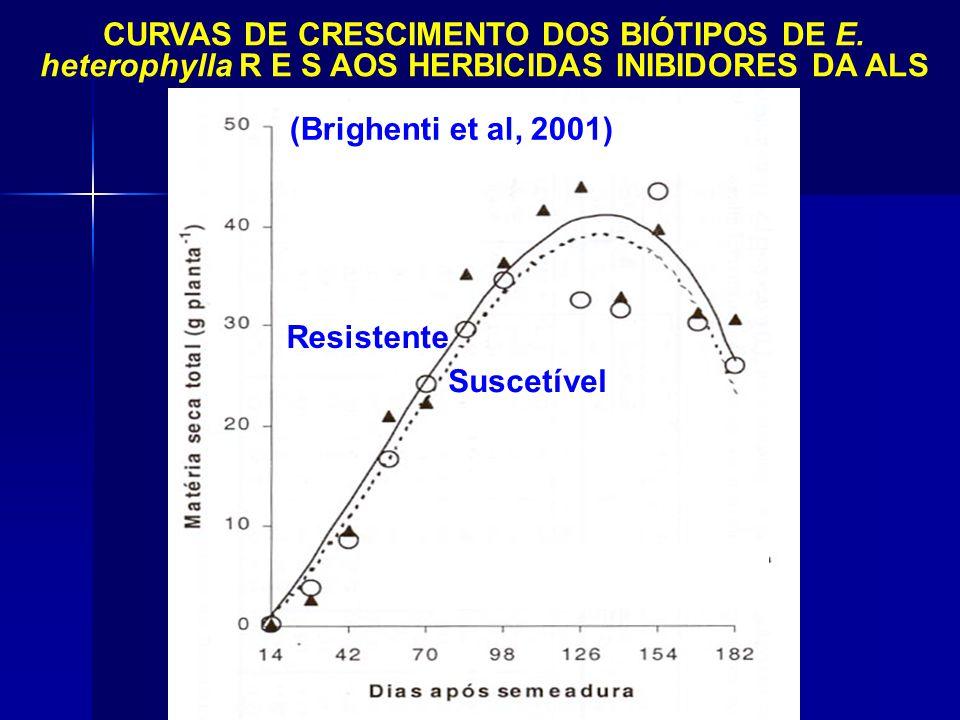 (Brighenti et al, 2001) CURVAS DE CRESCIMENTO DOS BIÓTIPOS DE E. heterophylla R E S AOS HERBICIDAS INIBIDORES DA ALS.