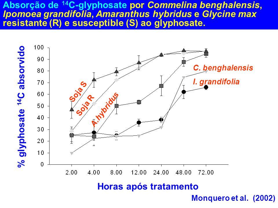 % glyphosate 14C absorvido