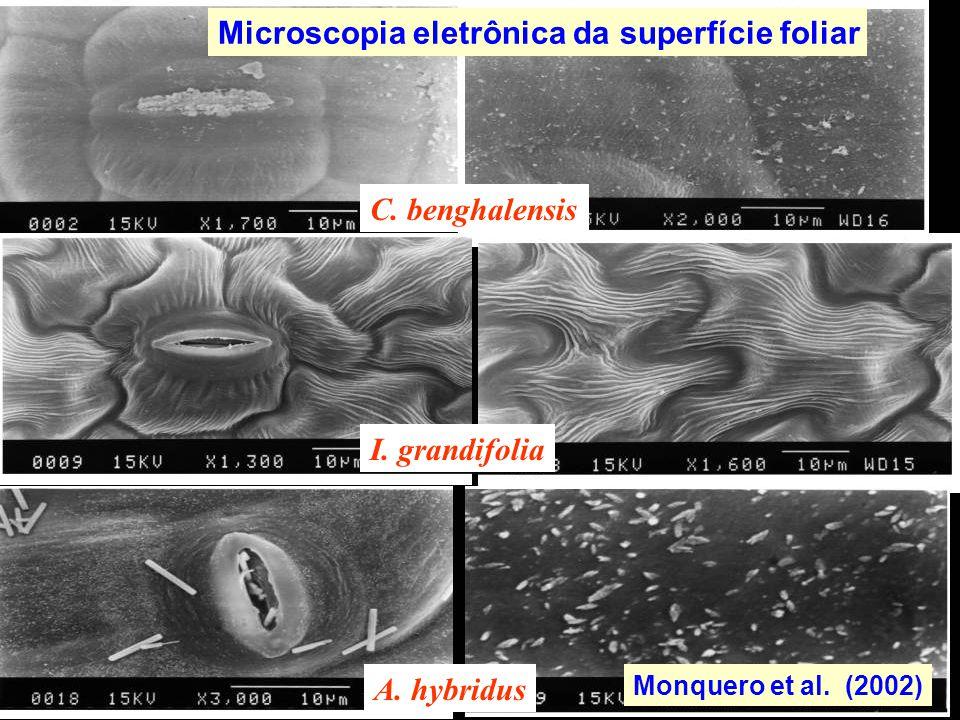 Microscopia eletrônica da superfície foliar