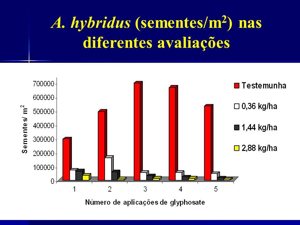 A. hybridus (sementes/m2) nas diferentes avaliações