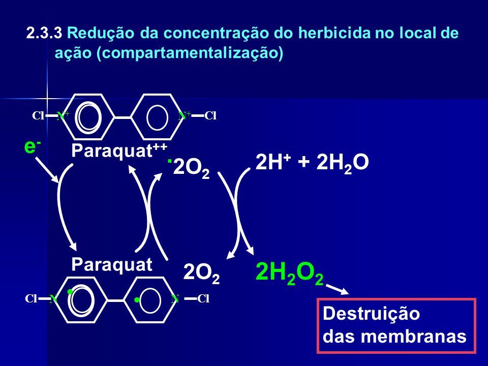 .2O2 . 2H2O2 e- 2H+ + 2H2O 2O2 Paraquat++ Paraquat Destruição