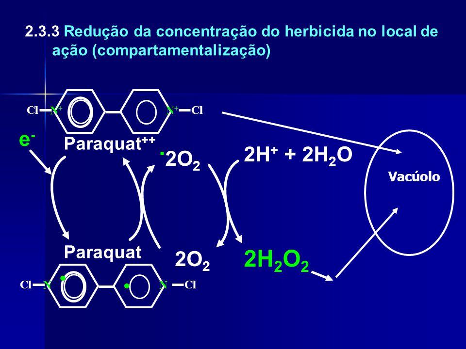 .2O2 . 2H2O2 e- 2H+ + 2H2O 2O2 Paraquat++ Paraquat